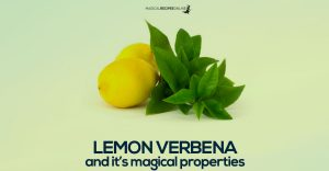 lemon verbena and its magical properties
