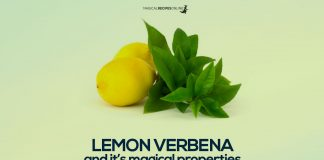 lemon verbena and its magical properties
