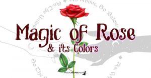 Magic of Rose & its Colors
