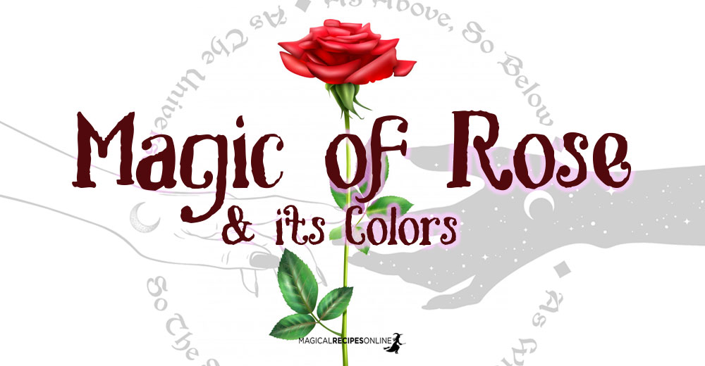 Magic of Rose & its Colors