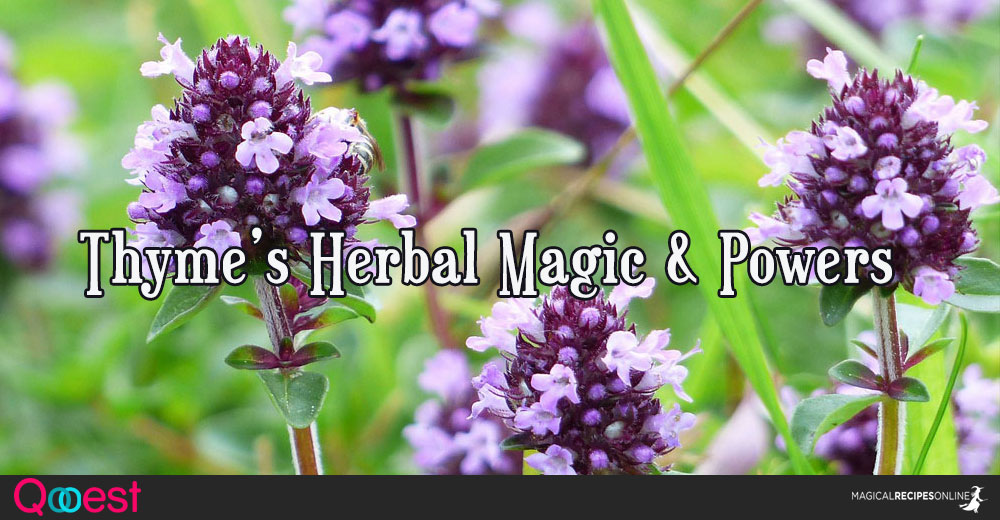 Herbal Magic of Thyme