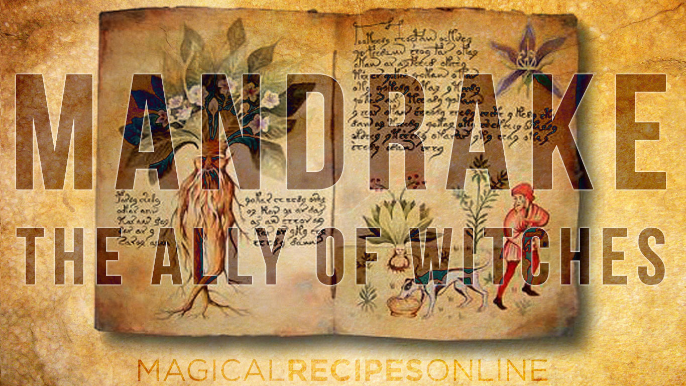 Herb Analysis: Mandrake, greatest ally of witches