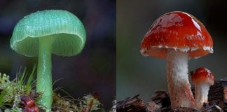wonderful photographs of Mushrooms