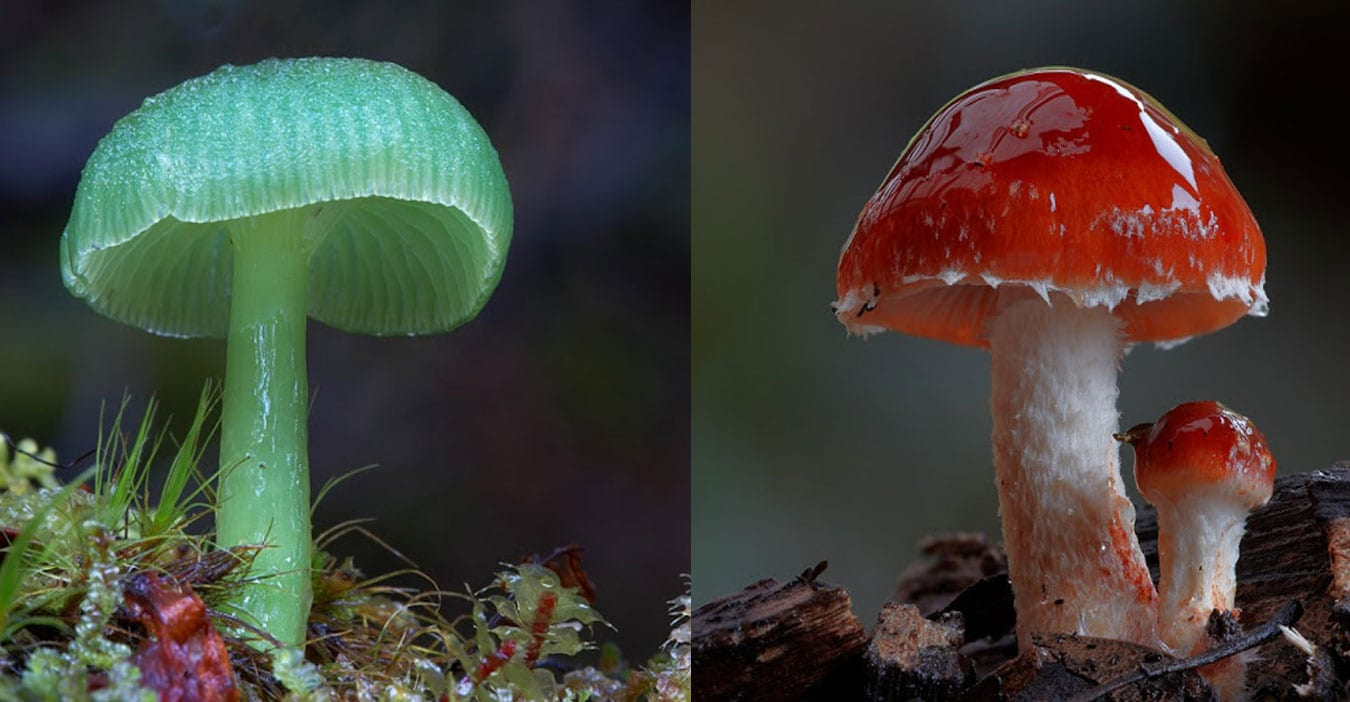 wonderful photographs of Mushrooms