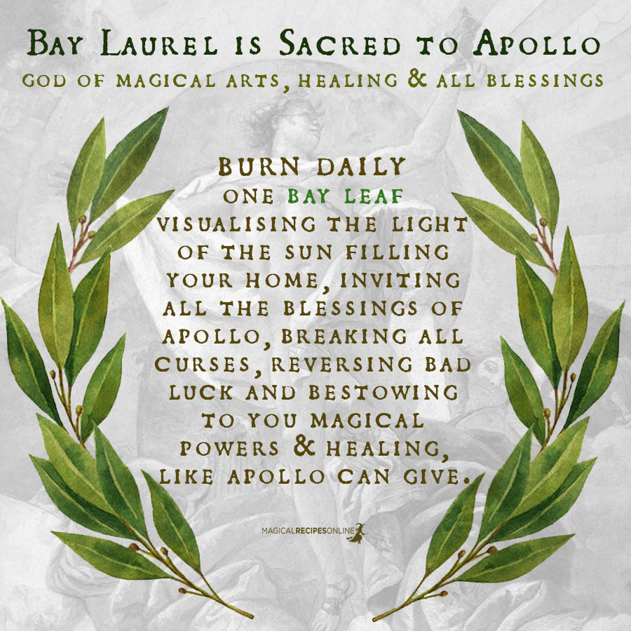 Bay laurel's leaves are filled with Apollo's (Sun's) energy. Creative energy, Cleansing energy, Clairvoyantenergy.