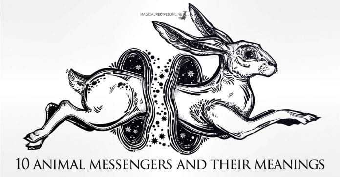 10 Animal Messengers as Omens and their meaning