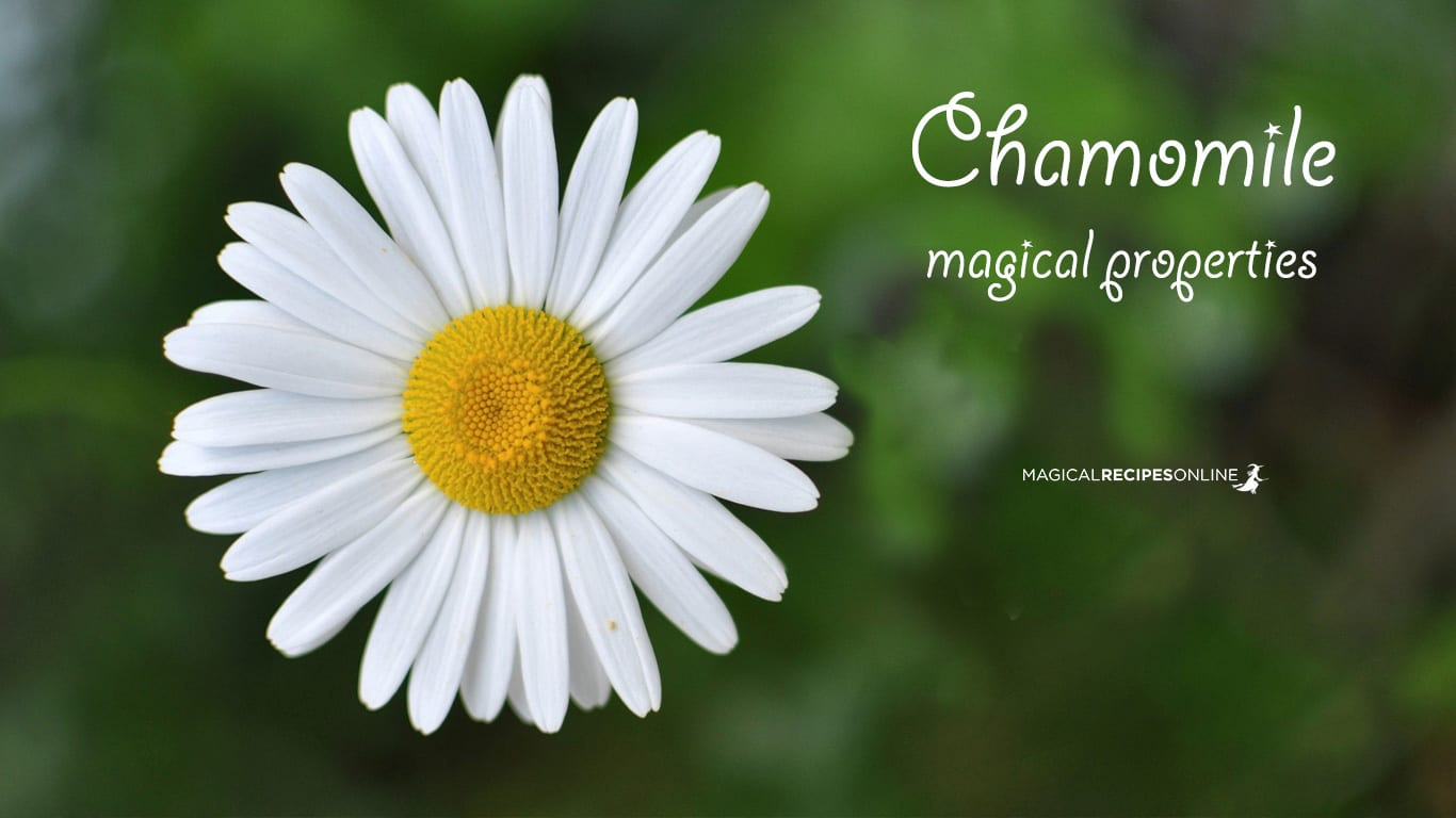 Chamomile And Its Magical Properties Magical Recipes Online