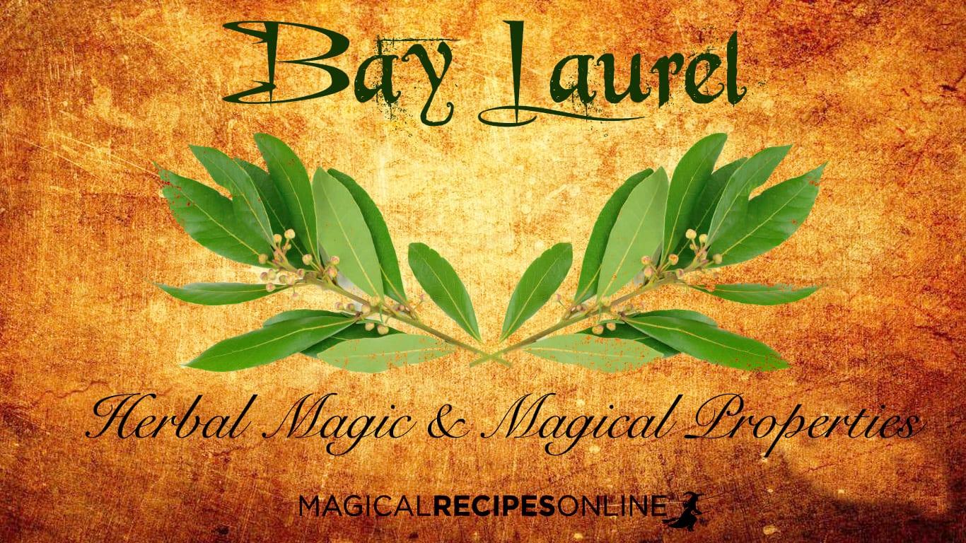 Bay Laurel and its Magical Properties - Magical Recipes Online