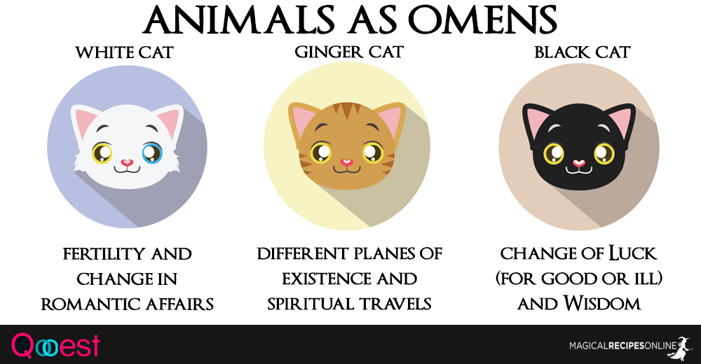 10 Animals As Omens When They Cross Your Path Magical Recipes Online