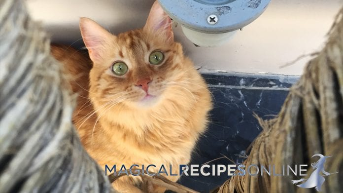 cats magical powers
