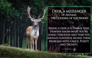 deers are messenger of Artemis -Diana, goddess of the Moon