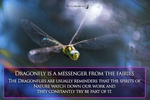 dragonfly is a spirit messenger from the fairies
