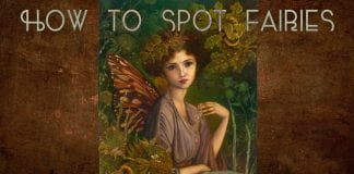 how to spot fairies