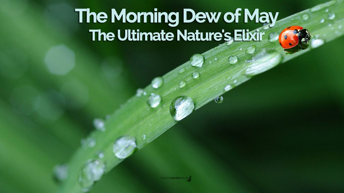 The Morning Dew of May. The Ultimate Nature's Elixir