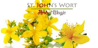 Herb Analysis: Saint John's wort, the Summer Solstice Litha herb