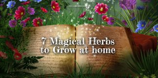 7 Magical Herbs to Grow at Home