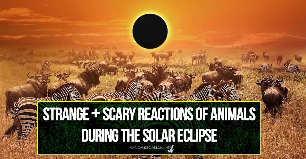 Pets & Animals Reactions during the Solar Eclipse