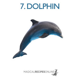 dolphin shapeshift