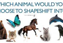 shapeshift quiz