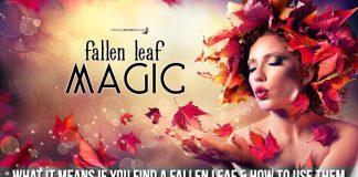 Fallen Leaf Magic - Each one has power