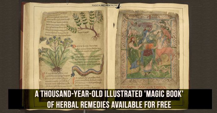 a thousand-year-old Illustrated 'Magic Book' of Herbal Remedies Available for Free
