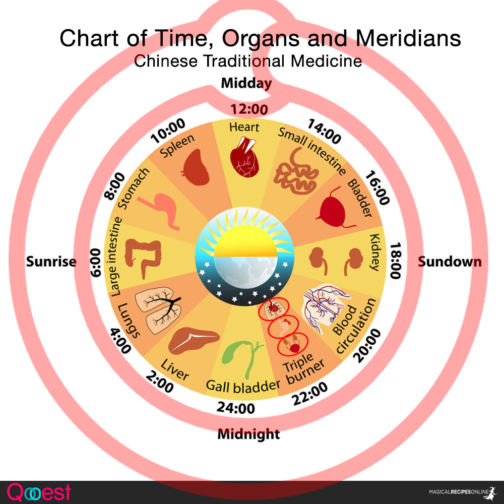 Chart of Meridians, time and organs. Traditional Chinese Medicine and Acupuncture.