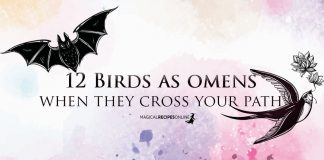 Birds as Omens when they Cross Your Path
