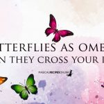 Butterflies as Omens - Their Colors and Meanings if You Spot them