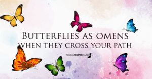Butterflies as Omens – Their Colors and Meanings if You Spot them