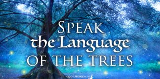 Speak the language of the Trees