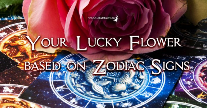 Your Lucky Flower based on Zodiac Signs