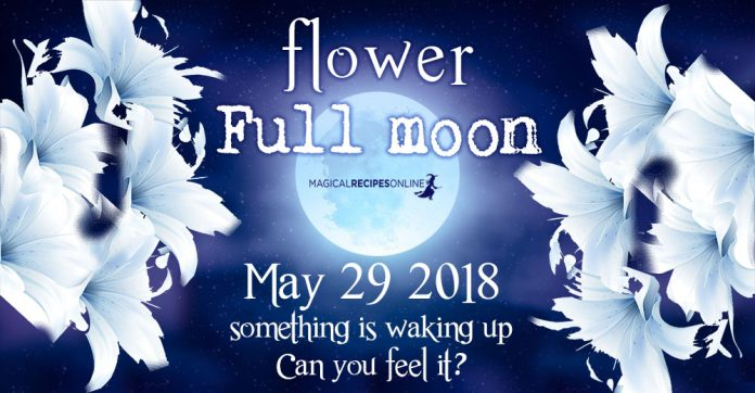 Flower Full Moon