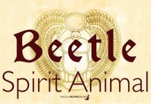 The Beetle Spirit Animal