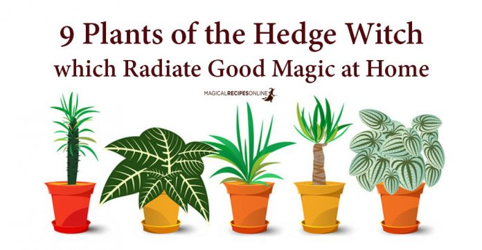 9 Plants that Radiate Good Magic at Home