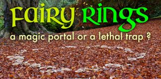 Fairy Rings: A magic portal or a lethal trap?