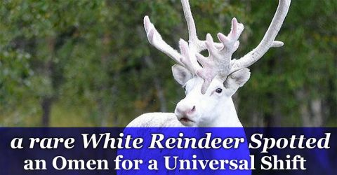 Rare White reindeer spotted in Norway - an Omen?