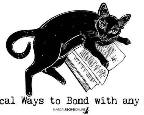 7 Magical Ways to Bond with any Animal