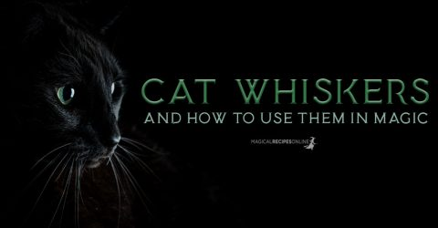 Cat Whiskers & Witchcraft