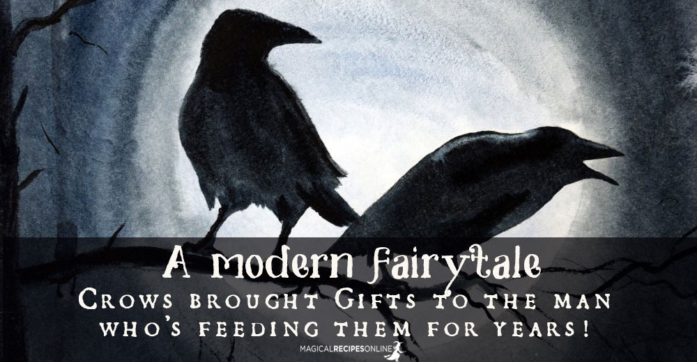 Crows brought Gifts to the man who's feeding them for years!