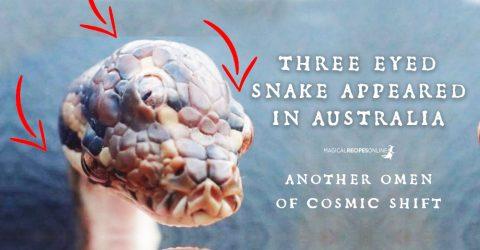 Three Eyed Snake Found - An omen of Cosmic Shift