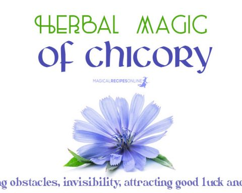 According to old grimoires, chicory is a marvellous herb. However, it needs to be treated in a special way in order to be potent.