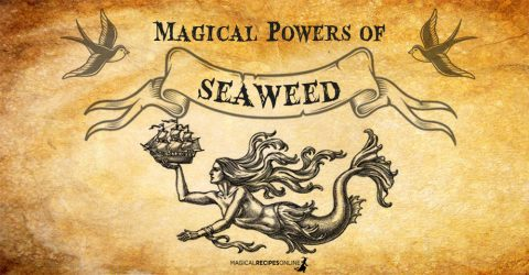 SeaWeed and its Magical Uses